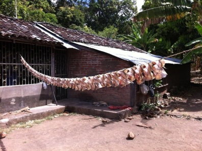 Drying fishes at the house of Santo the fisherman - Mérida, Ometepe Island, Nicaragua