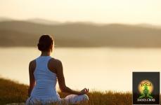 Du Yoga dans l'Bois